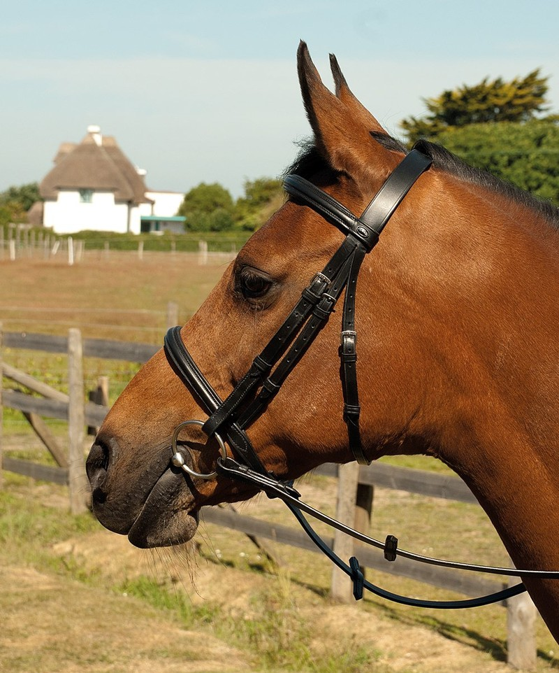 Heritage English Leather Bridle with Raised Cavesson Noseband