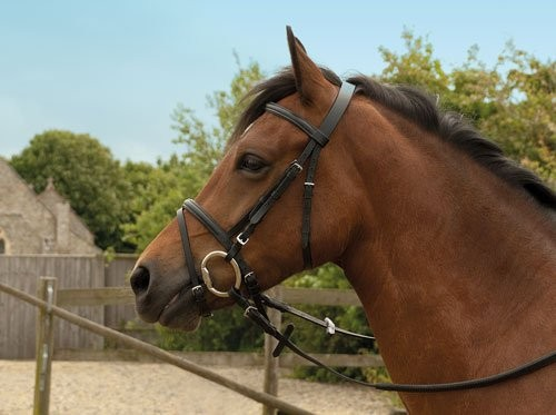 Windsor Leather Bridle with Flash Noseband