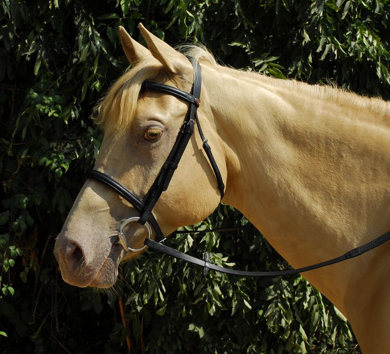 Windsor Leather Bridle with Cavesson Noseband