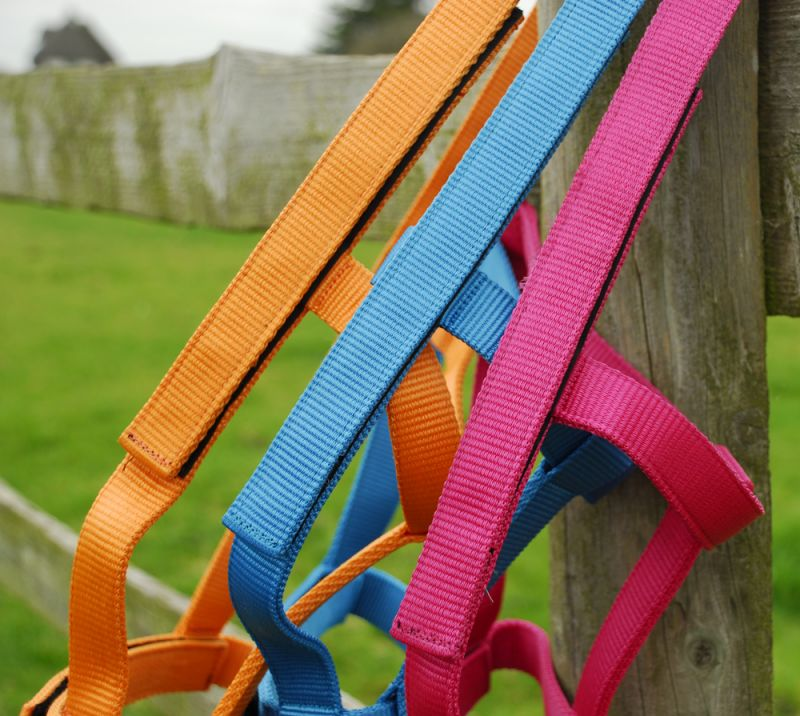 Rhinegold (Metal Free) Field Safe Headcollar