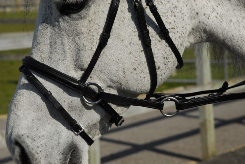 Rhinegold Crossover Bitless Bridle with Anatomical Headpiece