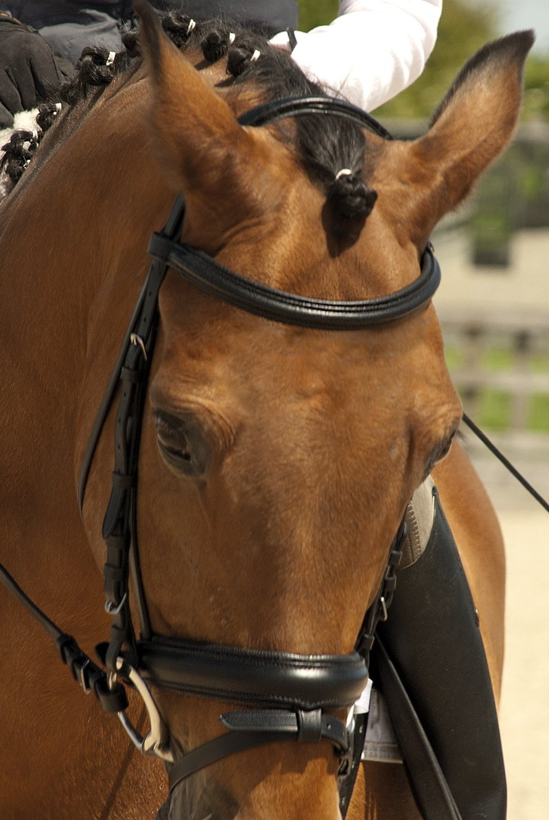 Rhinegold German Leather 'Comfort' Bridle with Flash Noseband