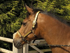 Rhinegold Sparkle Headcollar & Rope Set