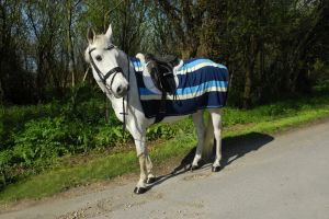 Rhinegold Fleece 3/4 Ride-On Rug