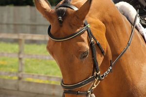 Rhinegold German Leather Gold Piped Bridle With Flash Noseband