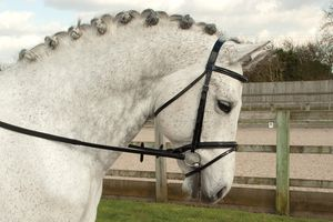 Rhinegold Patent Leather Bridle